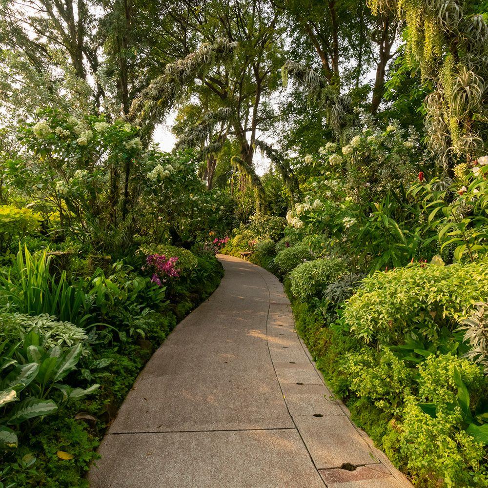 A Colourful Walk Around the Singapore Botanic Gardens