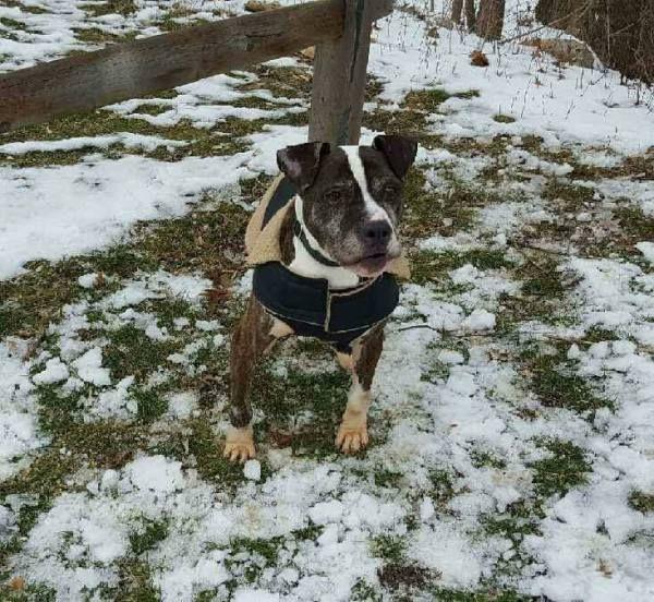 Photo Muttley Crue Dogs Dogs Rescue Dogs Animal Rescue