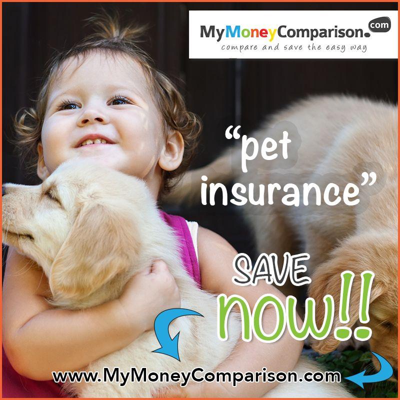 Compare Cheap Pet Insurance Quotes Online Pet Insurance Quotes Pet Insurance Cheap Pet Insurance