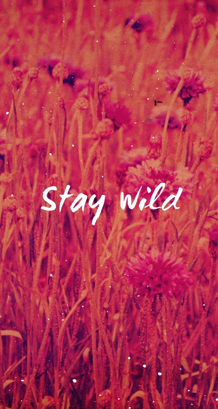 Stay Wild Iphone Wallpaper At Mobile9 Iphone 8 Iphone X