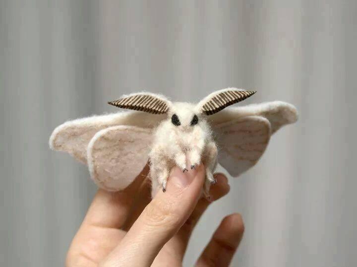 Pin Von Cherry Skyler Auf Cute Moths Niedliche Motten Motte Einzigartige Tiere Lebewesen