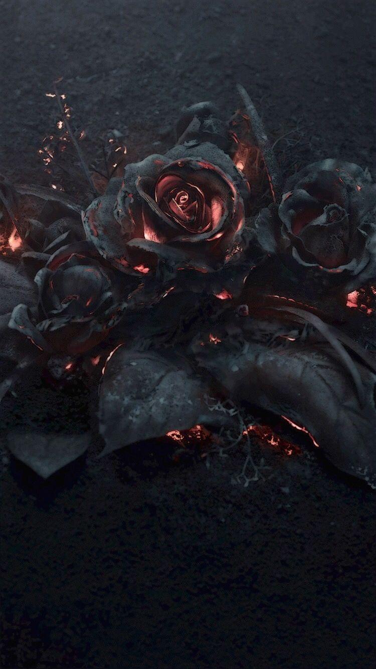 Black Rose Aesthetic Wallpaper