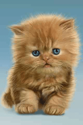 Download Gambar Kucing Lucu Dan Imut Ada Yang Lagi Tidur Makan Galau Hingga Marah Ada Banyak Gambar Pose Dan Ekspresi Lu Kittens Cutest Cute Cats Baby Cats
