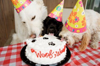 3 Recipes To Treat Your Dog With A Homemade Canine Cake