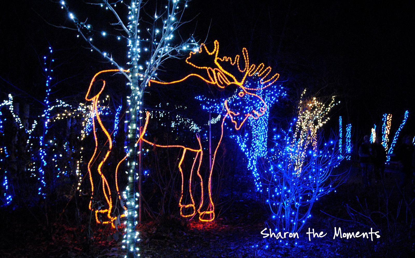 Exceptional Columbus Zoo Wildlights 2012 Annual Family TraditionSharon The Moments