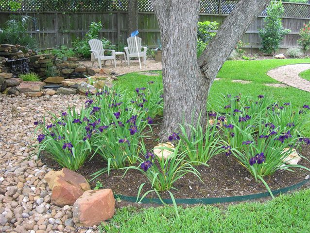 Designing An Iris Bed Austin Landscaper Hill Country Landscape Design Consulting Landscape Design Hardscape Landscape