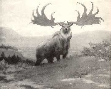 The Irish Elk or Giant Deer, was the largest deer that ever lived. It lived in Eurasia, from Ireland to east of Lake Baikal, during the Late Pleistocene and early Holocene. The latest known remains of the species have been carbon dated to about 5,700 BC, or about 7,700 years ago.