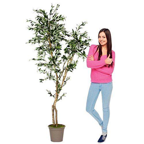 OLIVO con frutti - Tronco Vero (h 150 cm) Verdevip http://www.amazon.it/dp/B01C7J2OKA/ref=cm_sw_r_pi_dp_BVK8wb0ZEBM09