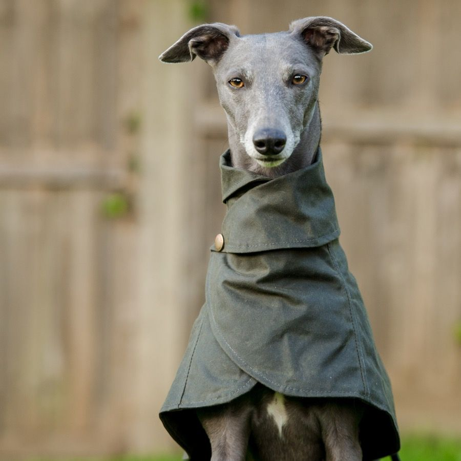 Wiltshire Whippet Coat Redhound For Dogs | Dog coats, Dog