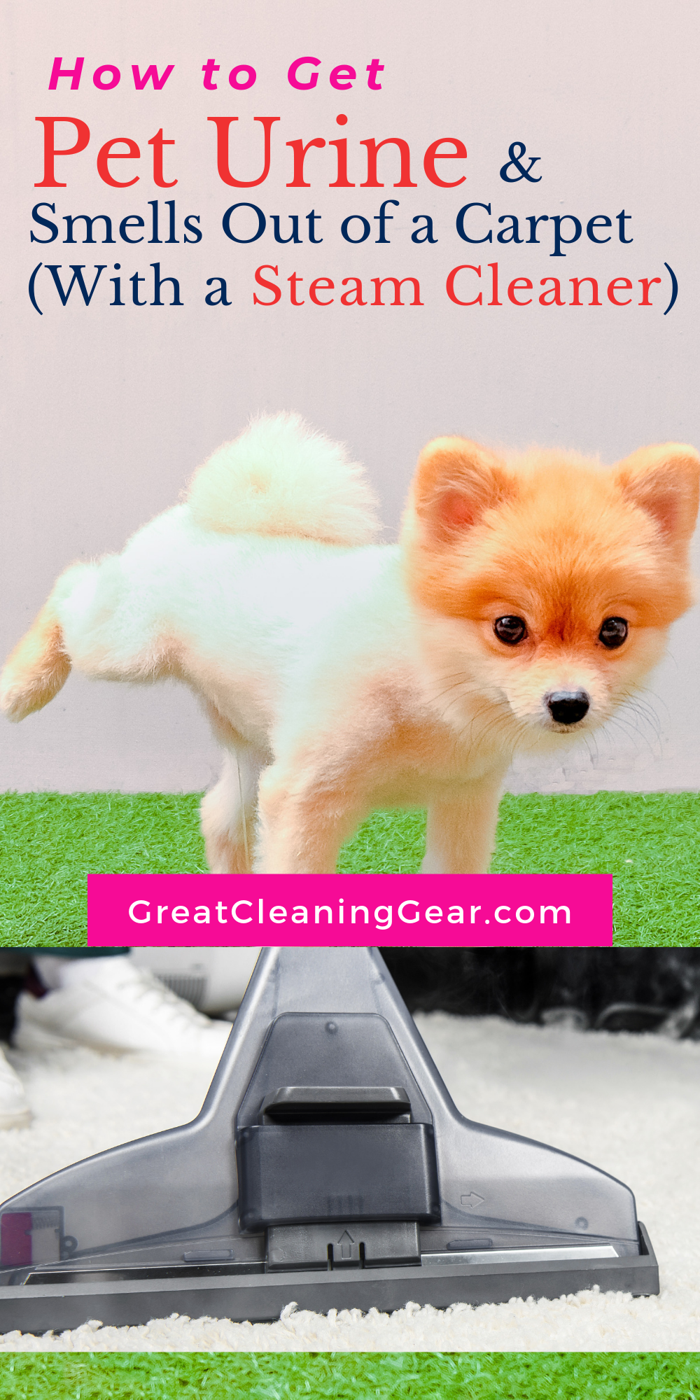 How To Steam Clean Carpet To Remove Dog Urine Steam Cleaners Steam Clean Carpet Carpet Steam Cleaner