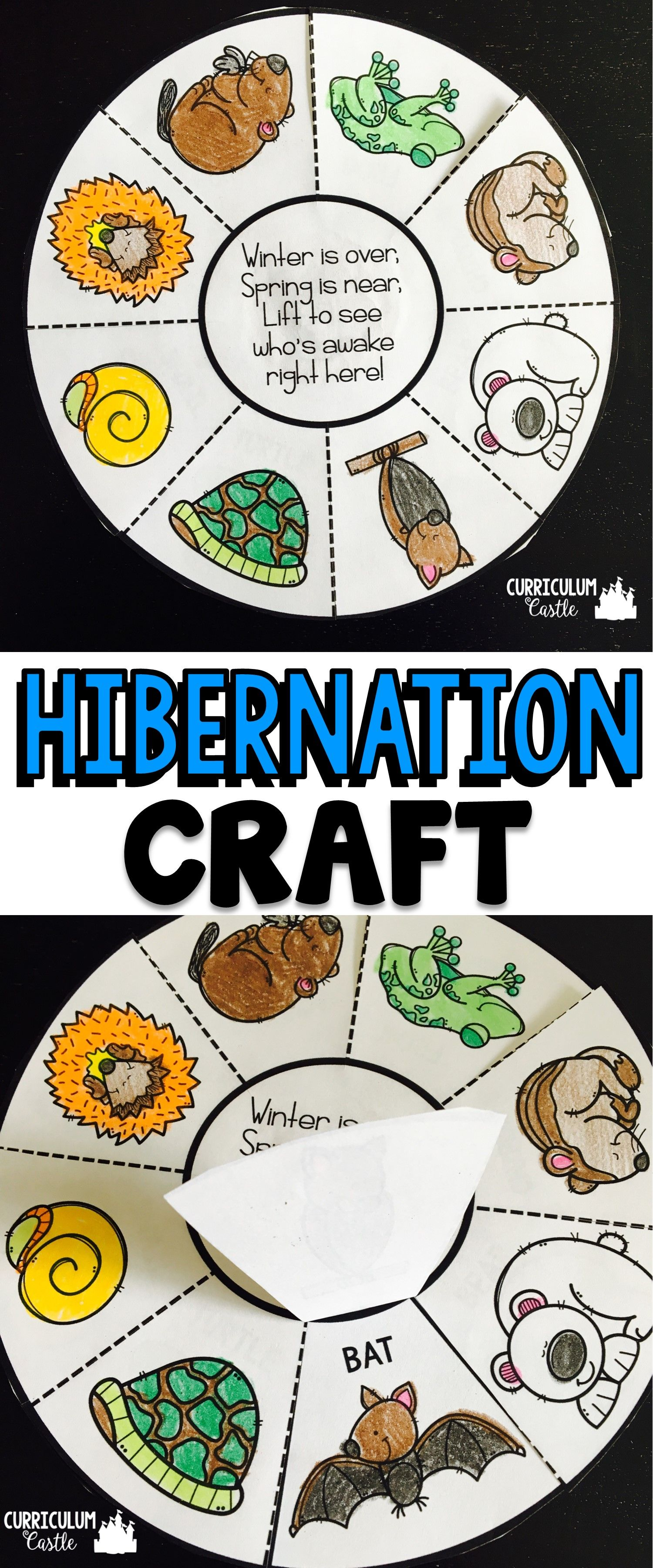 Hibernation Animals in Winter Animals that hibernate