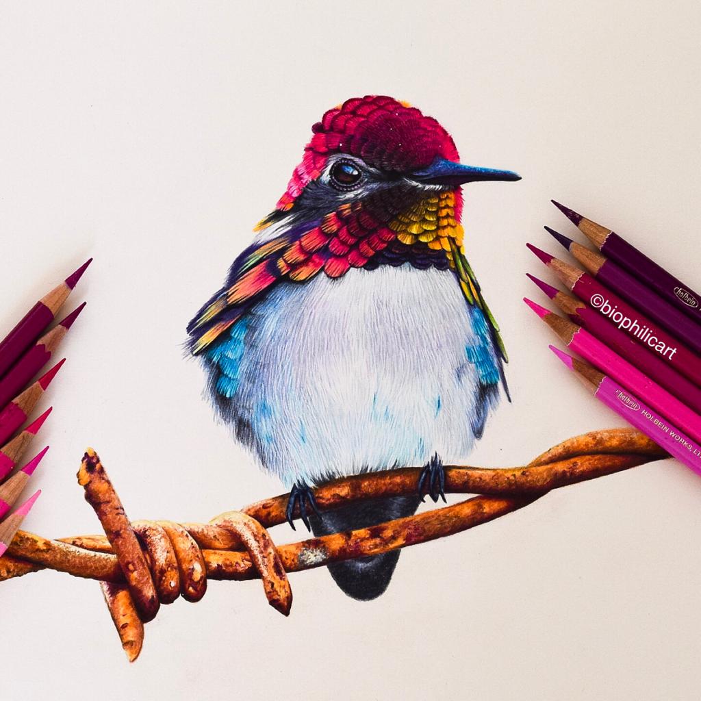 Original Colored Pencil Art Bird Pencil Drawing Color Pencil
