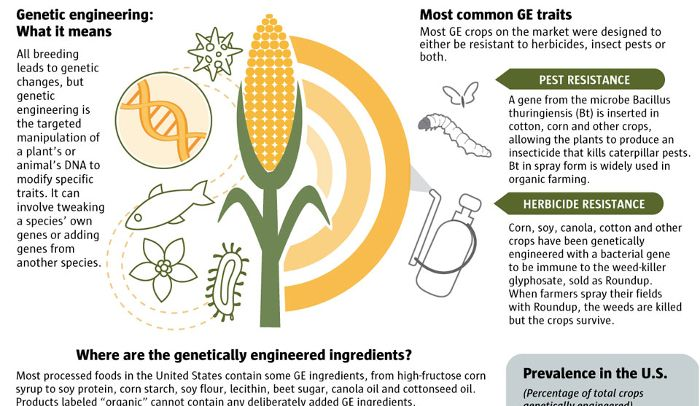 Pin On Science Genetically Modified Food Pro And Con Essay