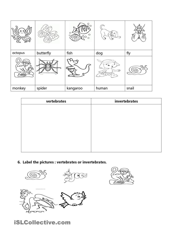 English worksheet: vertebrates / invertebrates | Education ...