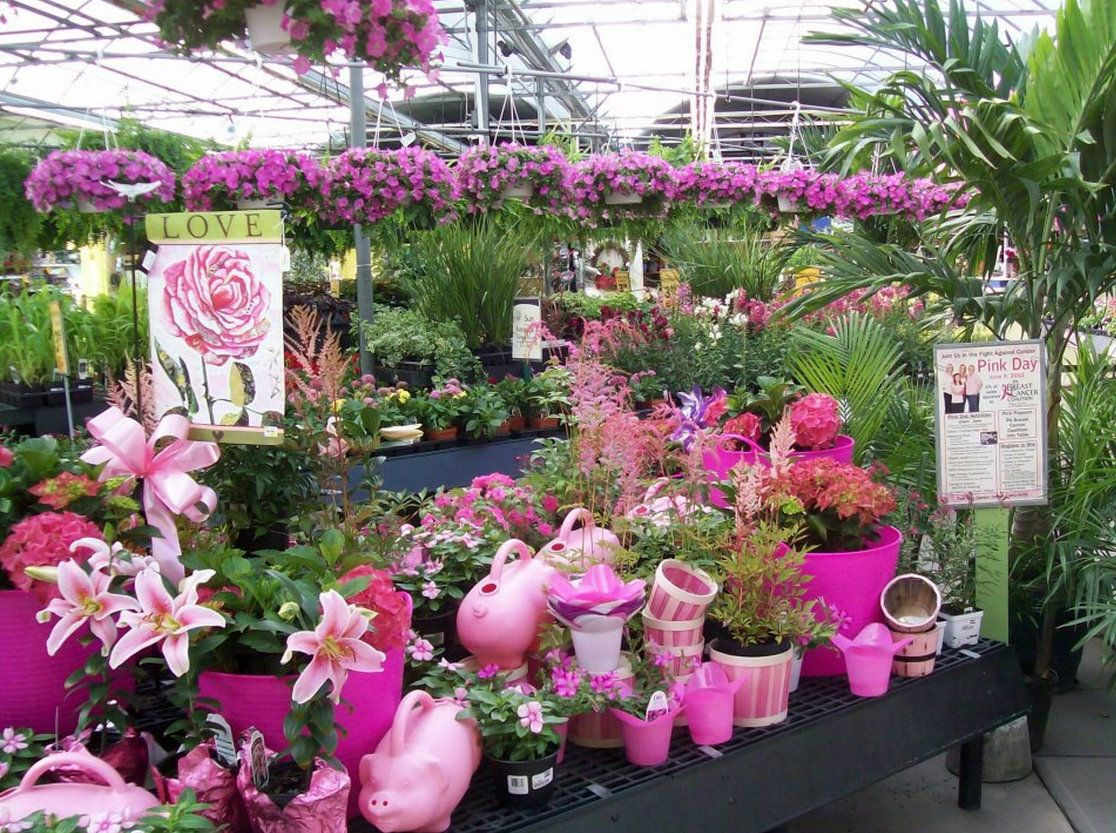 From Stauffer S Of Kissel Hill Pink Watering Cans Hanging