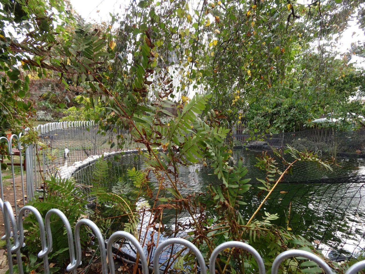 Da Wir Einen Fischreiher Als Gast Haben Wurde Eine Netz Uber Den Zaun Und Teich Gespannt Der Reiher Der Gelegentlich Unseren Fischbesa Fischreiher Teich Zaun