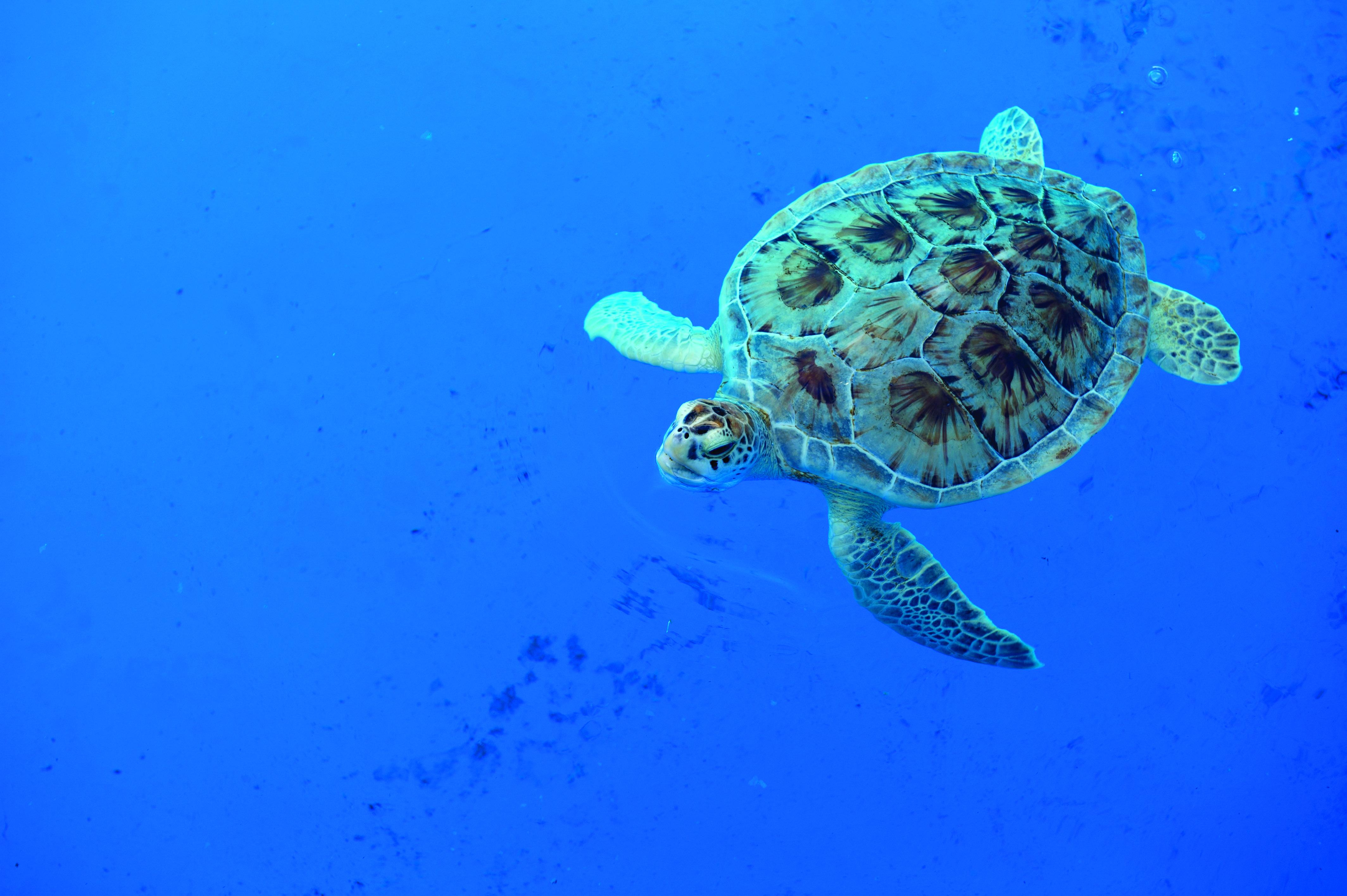 Marine Laboratory & Aquarium