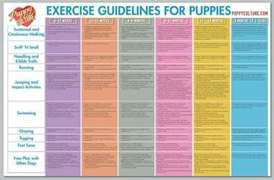 Exercise Guidelines For Puppies (from Puppy Culture)