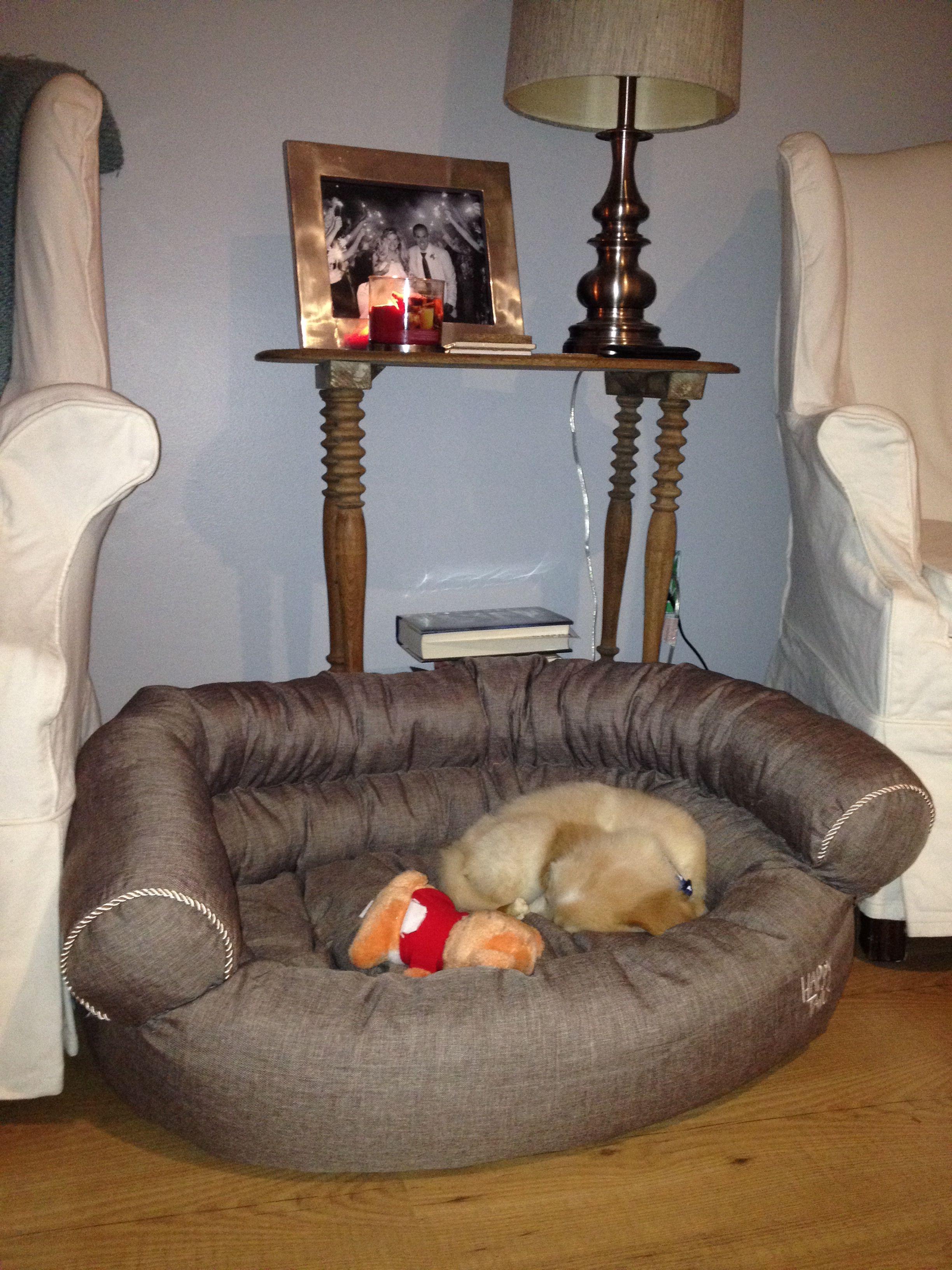 Home Goods dog bed. D'Zine Cool dog beds, Dog bed, Dogs