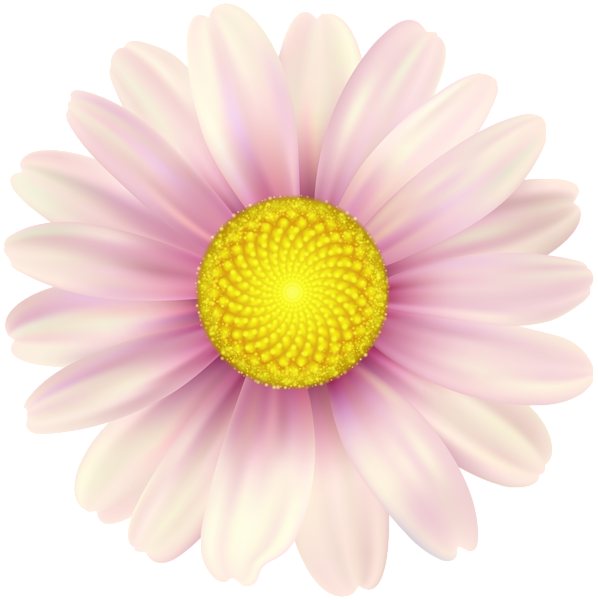Pink Daisy Clip Art Image In 2020 Art Images Clip Art Pink Daisy