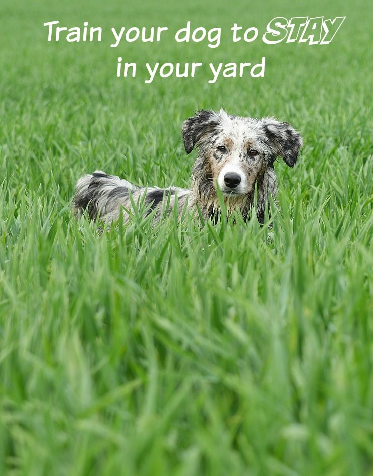 Dog Training Tips Training Your Dog To Stay In The Yard Dog