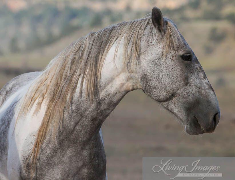 Pin by lynne turner on wild horses horses wild horses