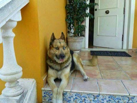 Perduts: LATA, perra perdida en L'Eliana (Valencia)