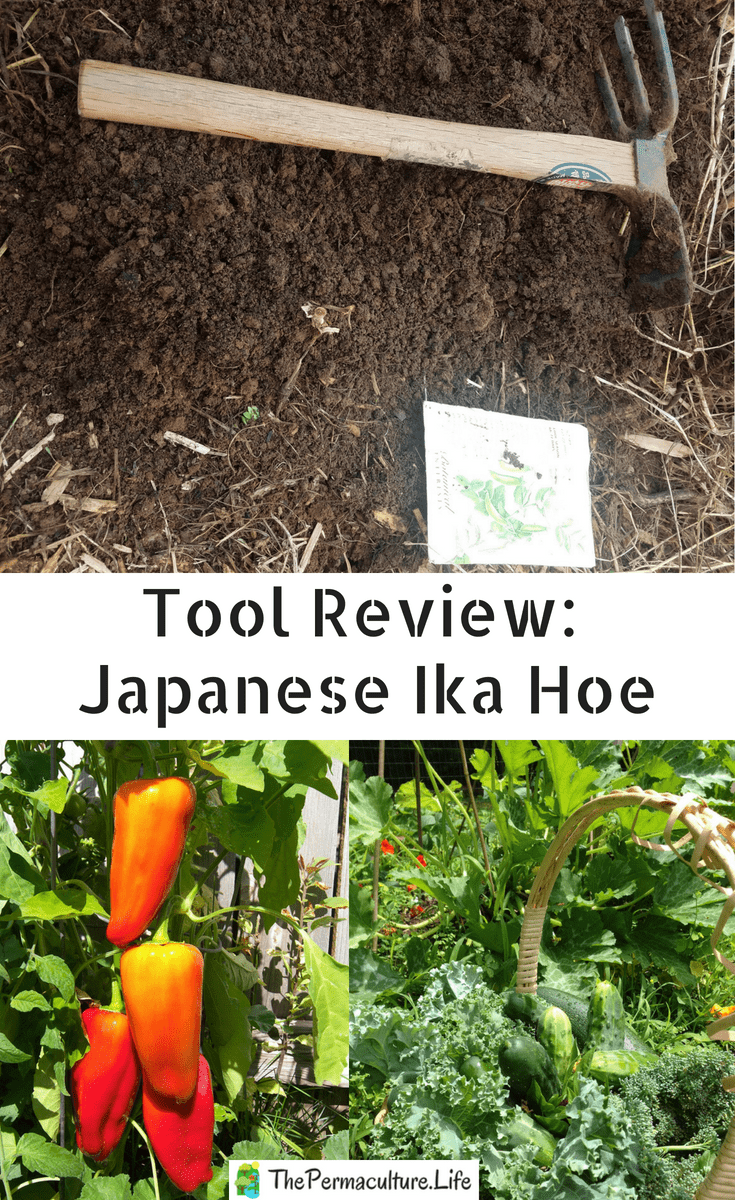 Tool Review: Japanese Ika Hoe | Creative gardening ...
