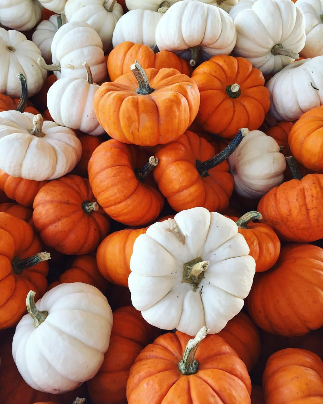 Little pumpkins, iPhone wallpaper, background, fall (With