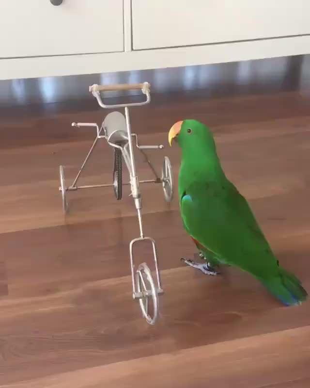 Cute little bird on a cute little bicycle