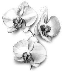 Bildergebnis für orchidées tatouage