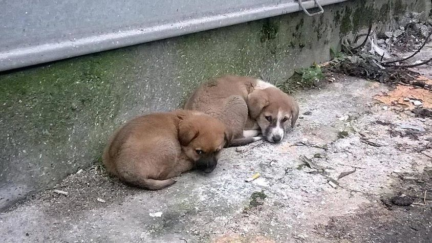 Illegal Fighting Of Dogs And Mass Poisoning In Tirana Oipa Member League Animal Rescue Albania Asks A Stronger Animal Welfare Law