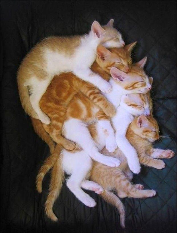 Diese 15 entzückenden Momente zwischen Mama- und Babykatze bringen dein Herz zum Schmelzen. #gingerkitten