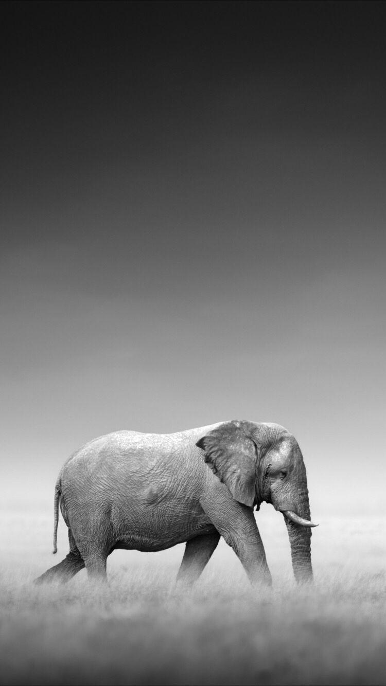 Nice Elephant Wallpaper Wild Elephant Elephant Wallpaper Animals Beautiful