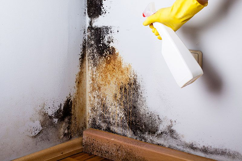 Black mold removal and health effects usa restoration