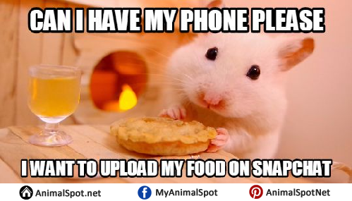 5d32ae028f2a38e98f377dd629124627 hamster memes different types of funny animal memes pinterest