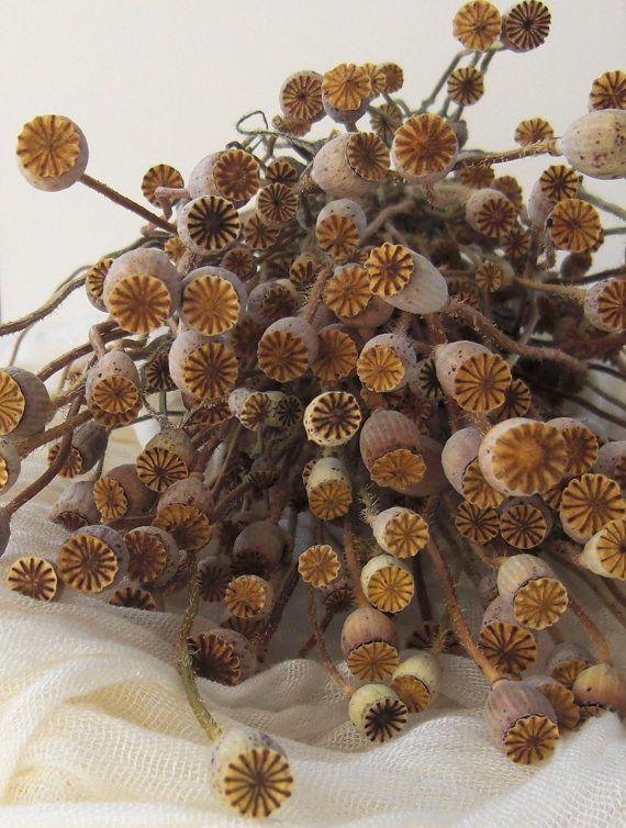 Poppy Dried Gold Color Poppy Heads Dried Giant Papaver Heads Flower arranging