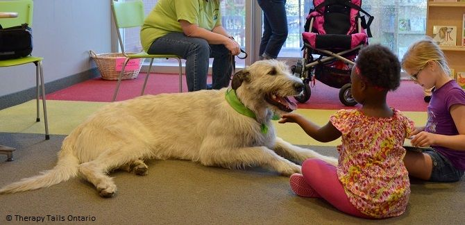 Therapy Dogs Therapy Dogs Irish Wolfhound Wolfhound