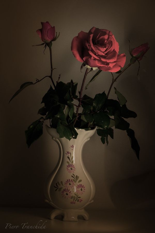 Rose By Piero Tranchida Photo 68052477 500px Flower Art Red Roses Rose