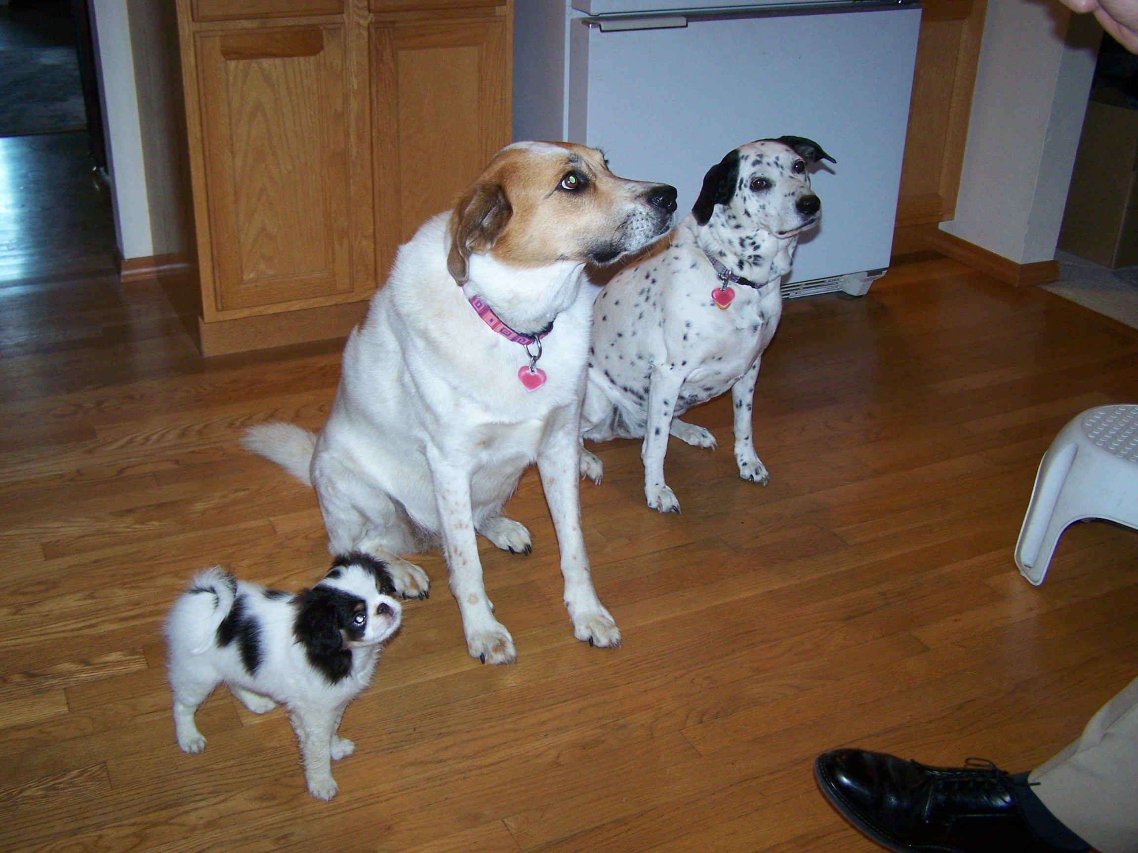 Recognize Opportunity Dogs, Best dogs, Fig newtons cookies