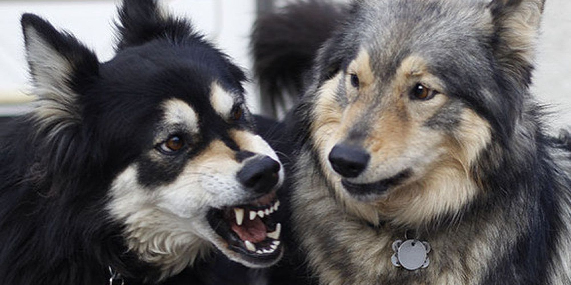 Your dogs are fighting step in or step off dog dog health care