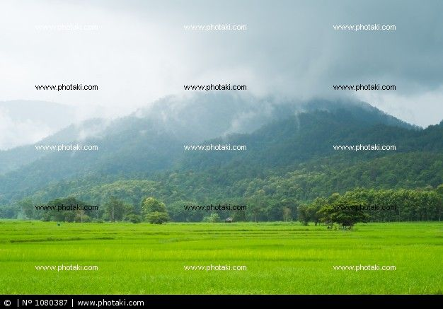 http://www.photaki.com/picture-landscape-of-rice-fields-in-thailand_1080387.htm