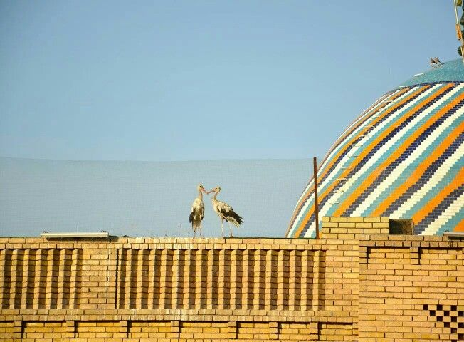 Ciconiidae (Stork) The symbol of Erbil city