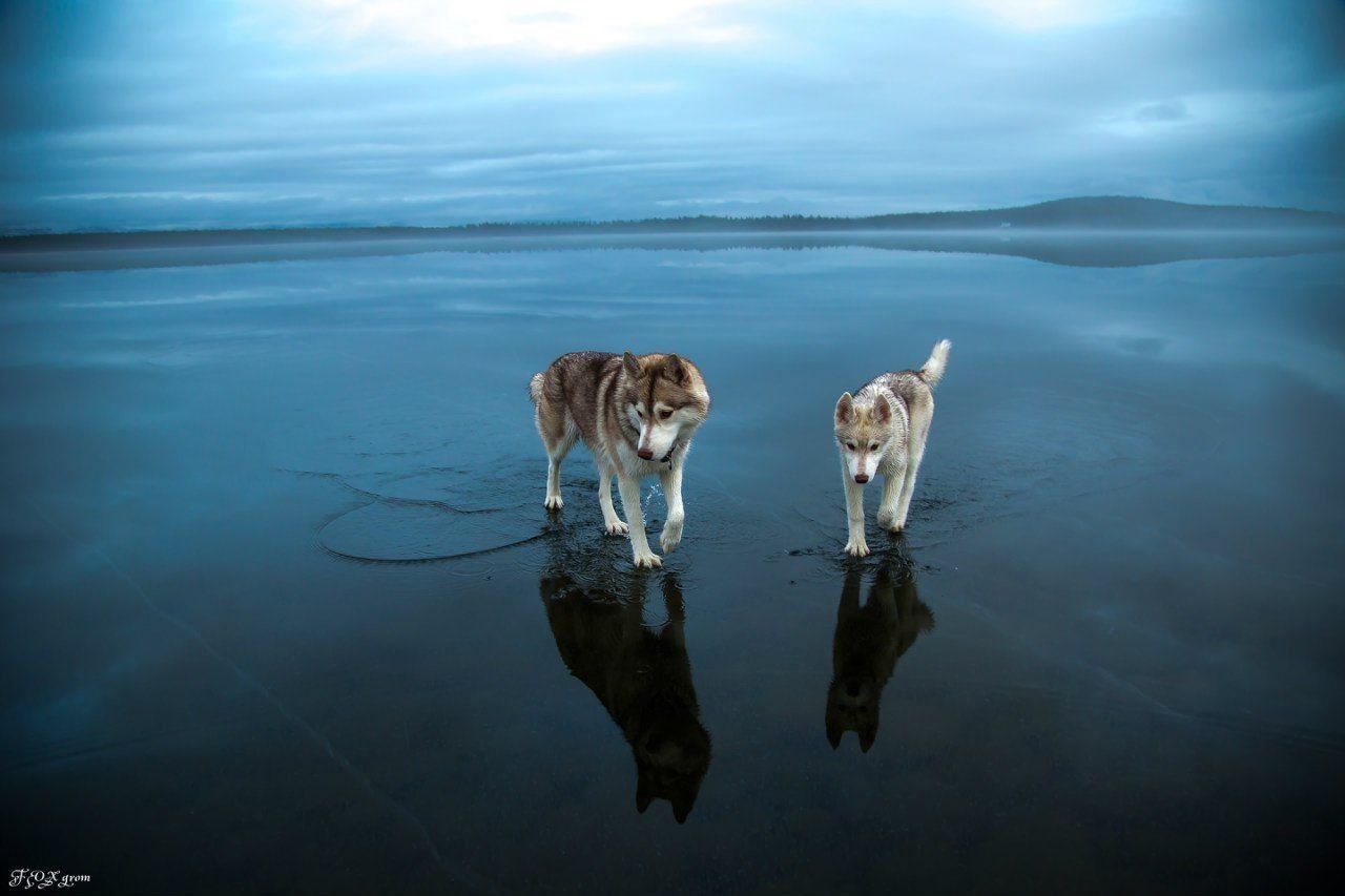 Koirat kävelevät jäällä – maailmalla äimistellään valokuvia – Stara