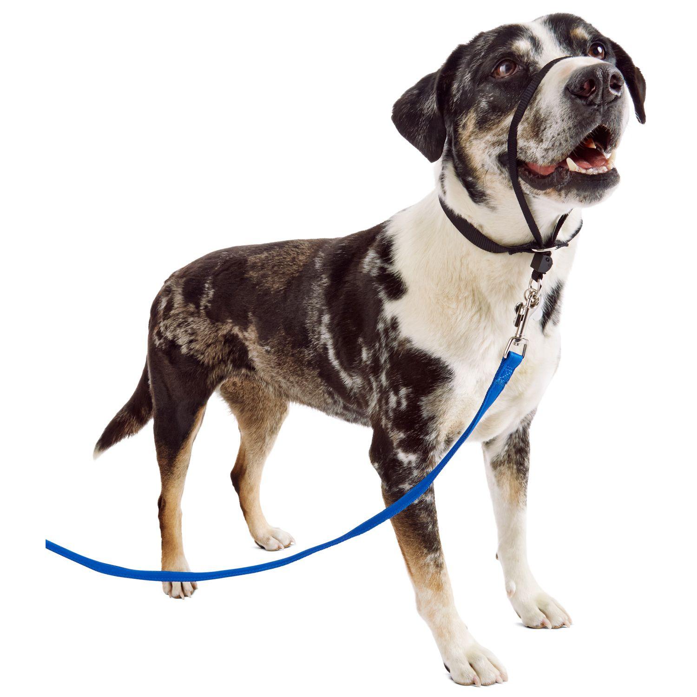 Petsafe Products Black Gentle Leader Headcollar Petco Gentle Leader Petco Dogs