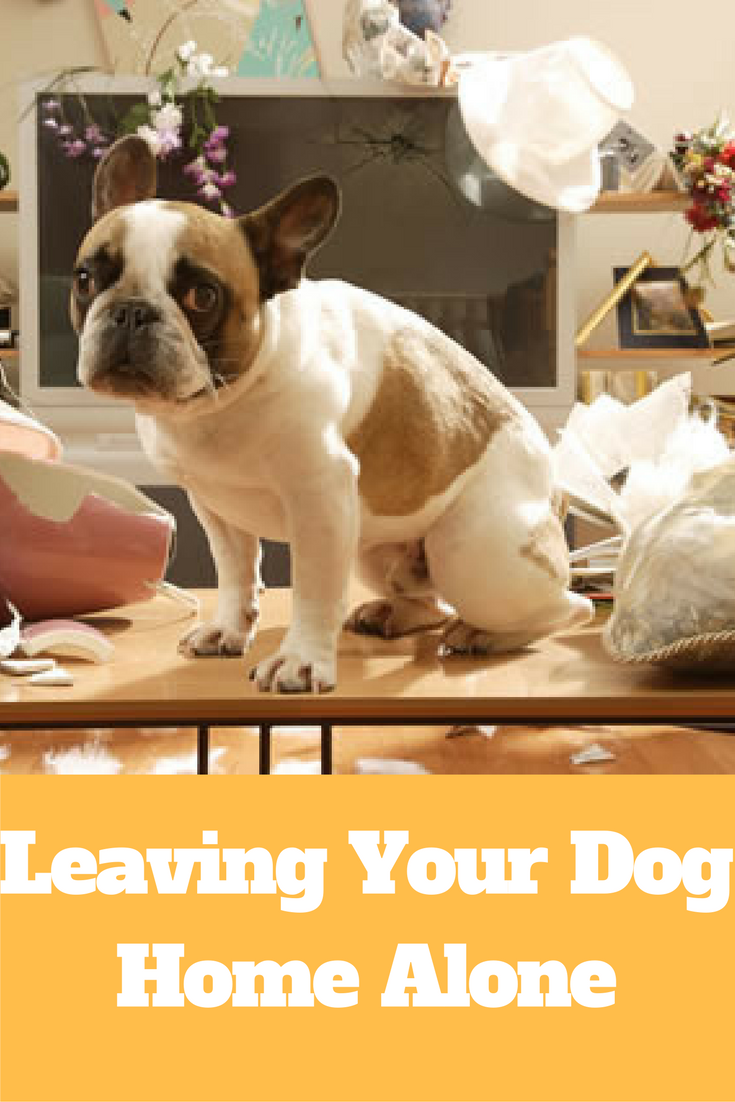 Leaving Your Dog Home Alone Http Www Erdepo Sweetdogpalace