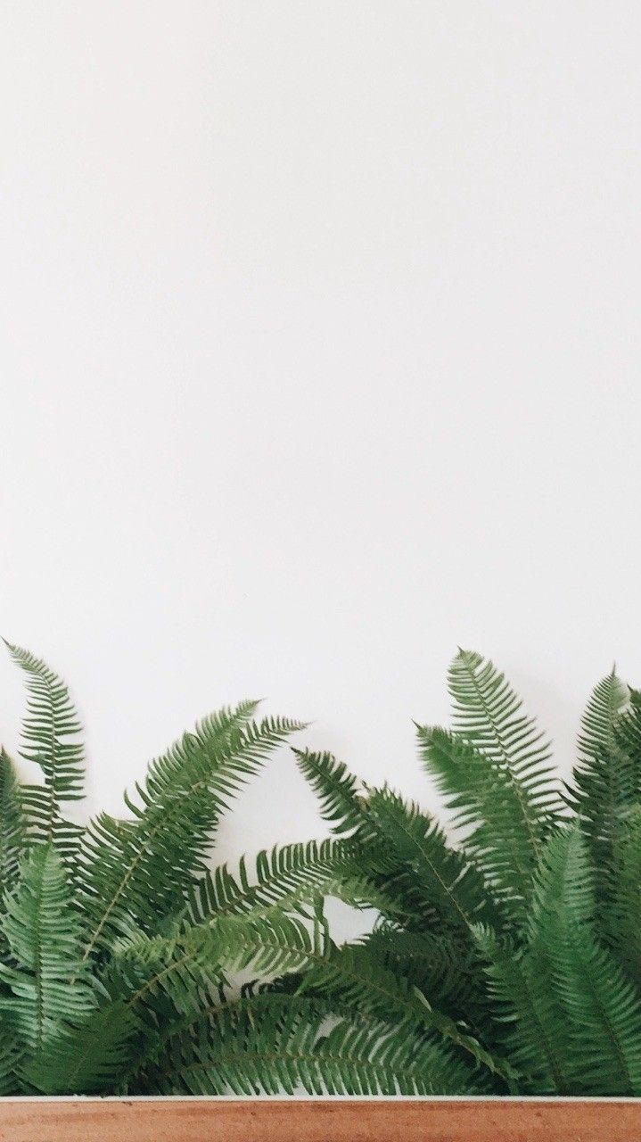 Download Latest Minimalist Phone Wallpaper HD This Month by Uploaded by user