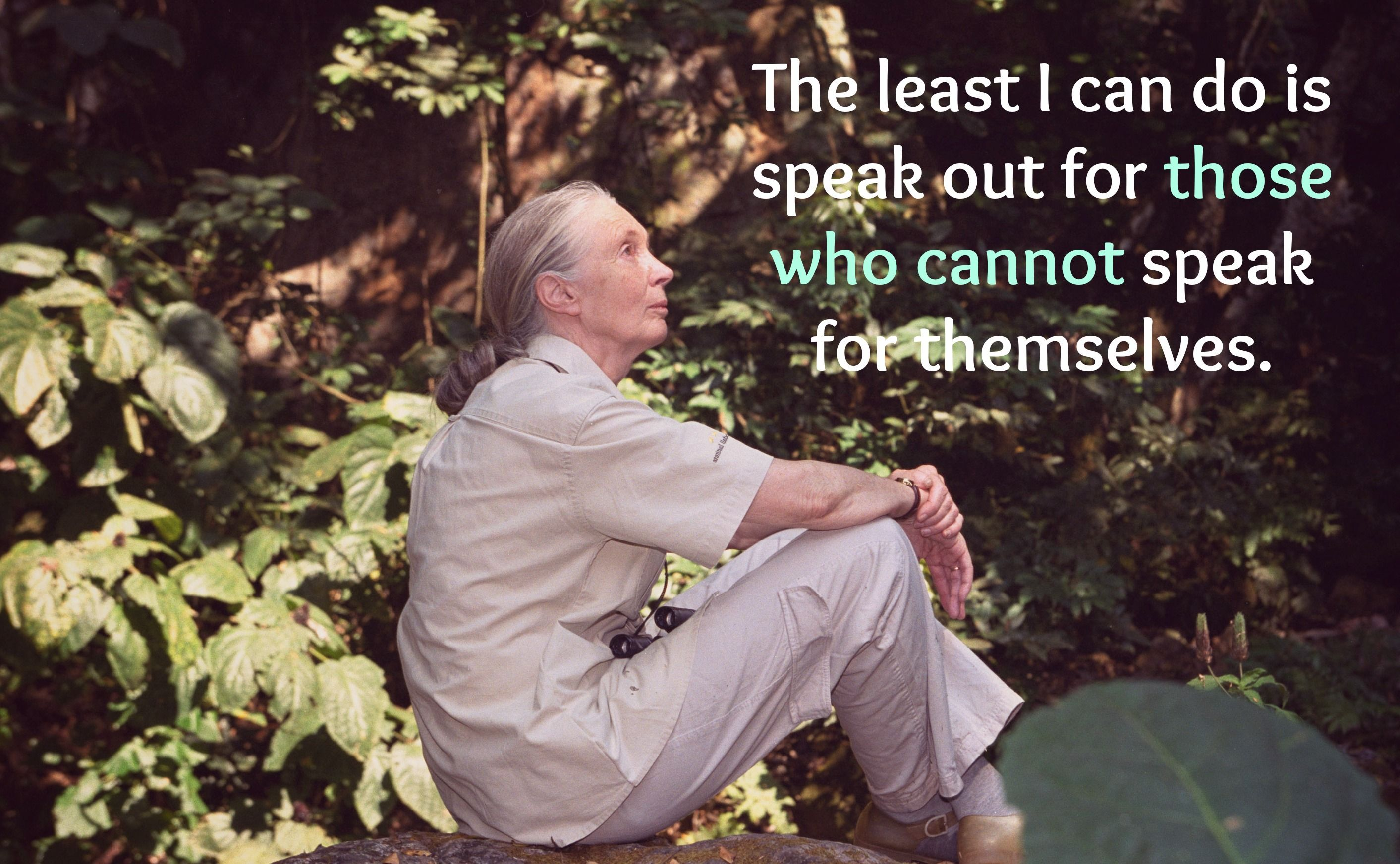Jane Goodall Quotes Best These Amazing Jane Goodall Quotes Will Inspire You To Fight For