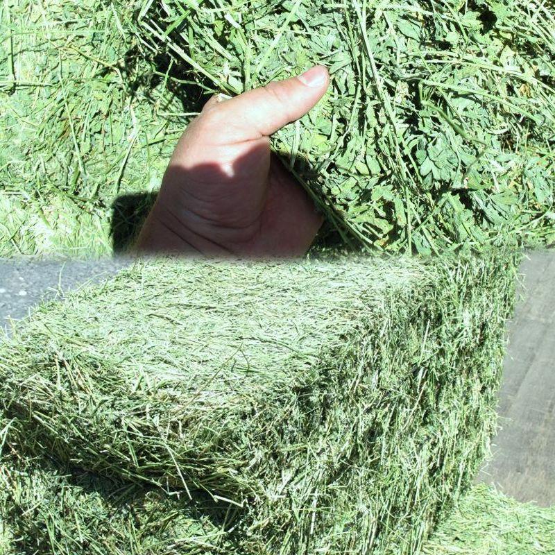 Small Square Alfalfa Bales | 2002 2nd cut alfalfa hay in 2 string bales