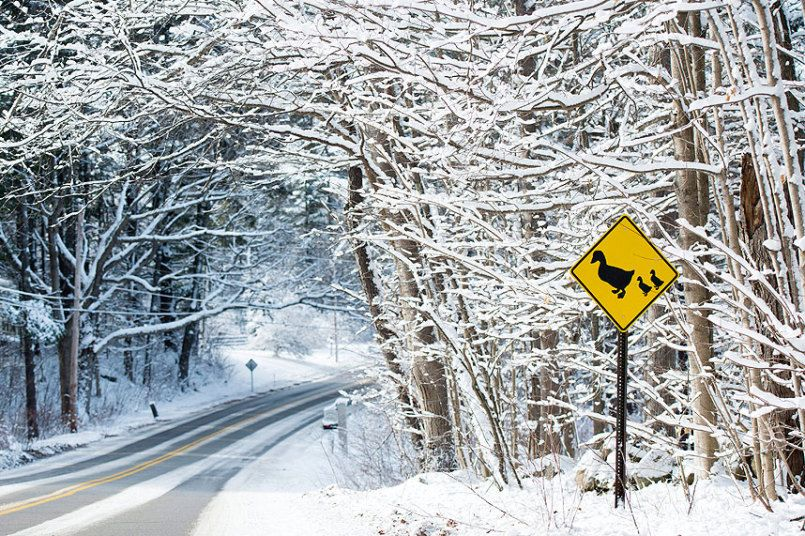 A duck-crossing sign stands in front of trees covered in snow remaining from winter storm Lexi, in Bedford, New Hampshire, USA